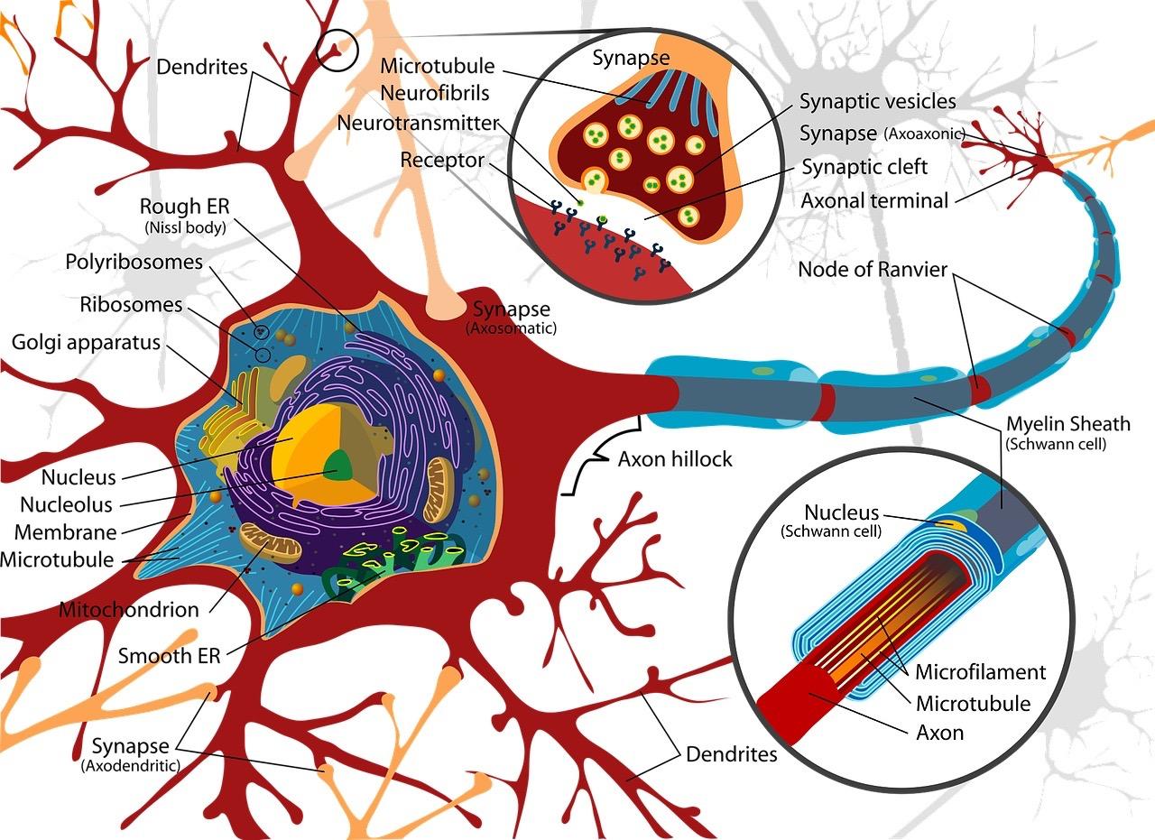 Neuropathies