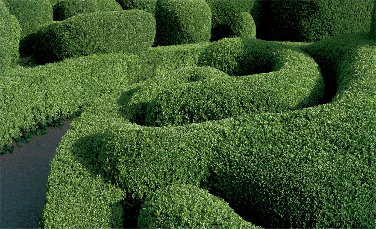 topiary-2.jpg