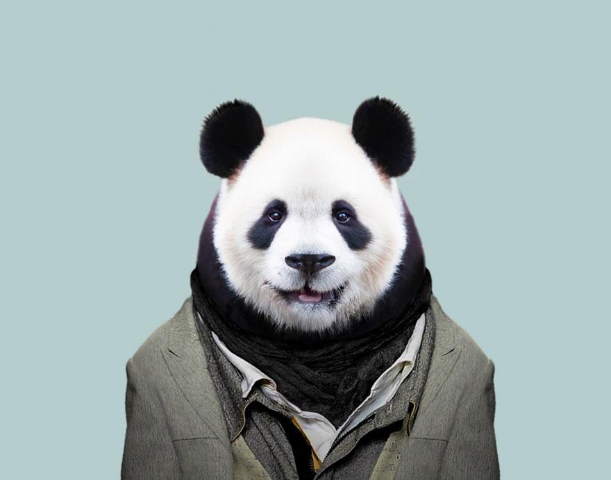 animals-dressed-like-humans-zoo-porraits-yago-partal-59-57d65d3de26dc__880.jpg