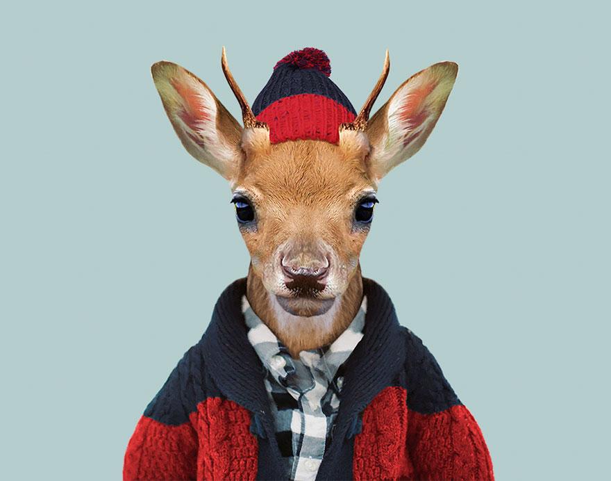 animals-dressed-like-humans-zoo-porraits-yago-partal-144-57d65e0b665ca__880.jpg