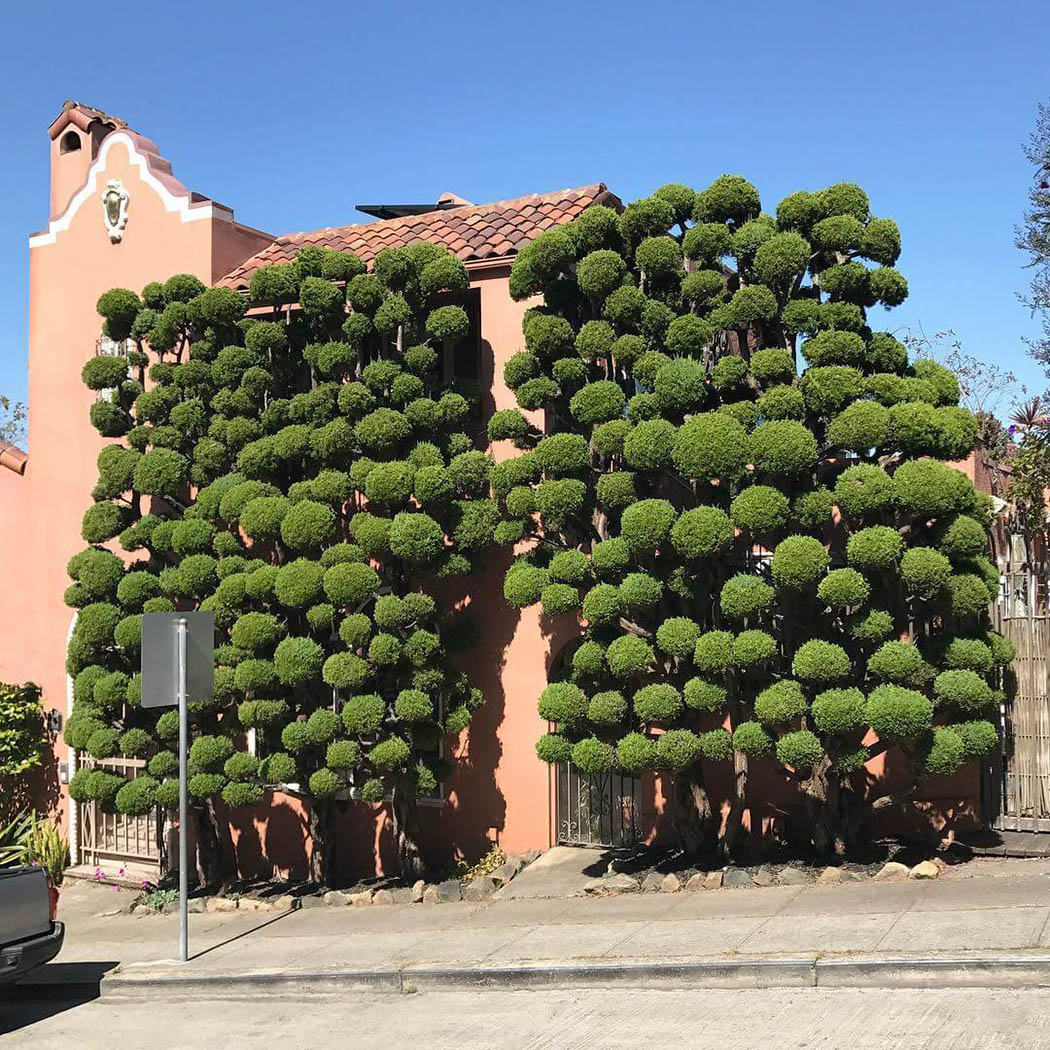 iGNANT_Photography_Kelsey_McClellan_San_Francisco_Trees_13.jpg
