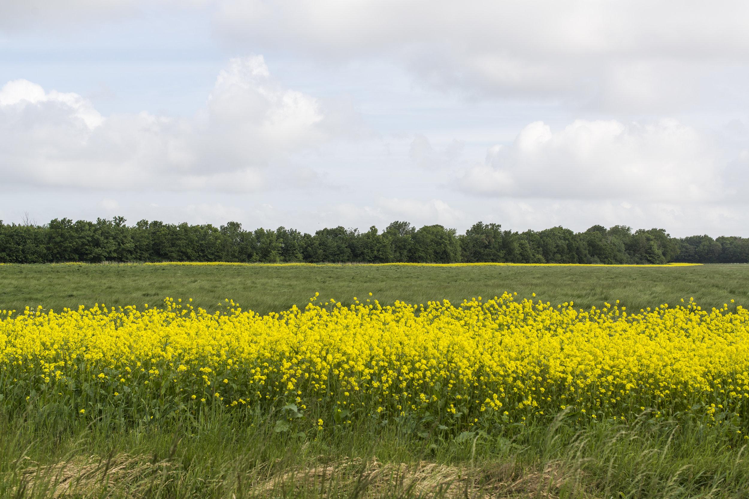 ©-Yorit-Kluitman-Gemeente-Noord-Beveland.jpg