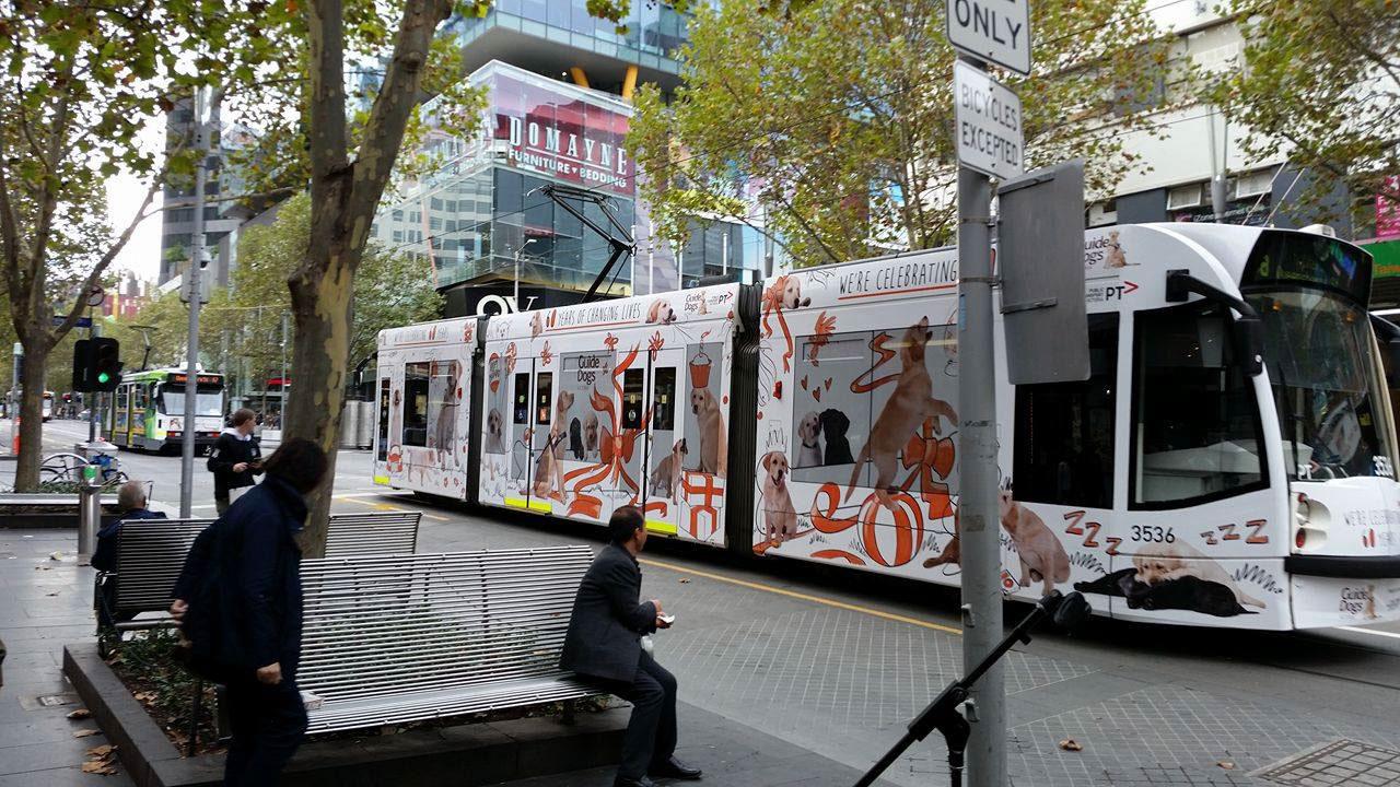 Chulo Creative Bill Hope guide dogs tram