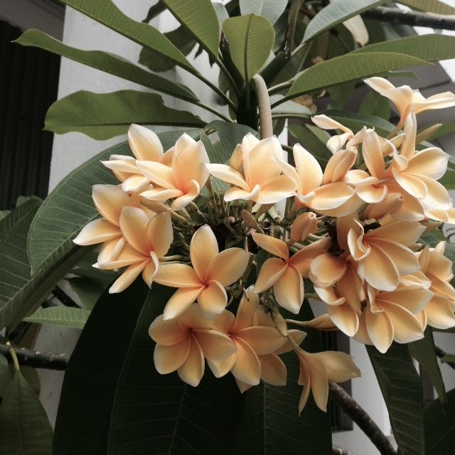 Flower bloom_002.JPG