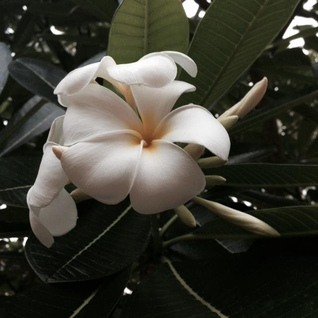 Flower bloom_001.JPG