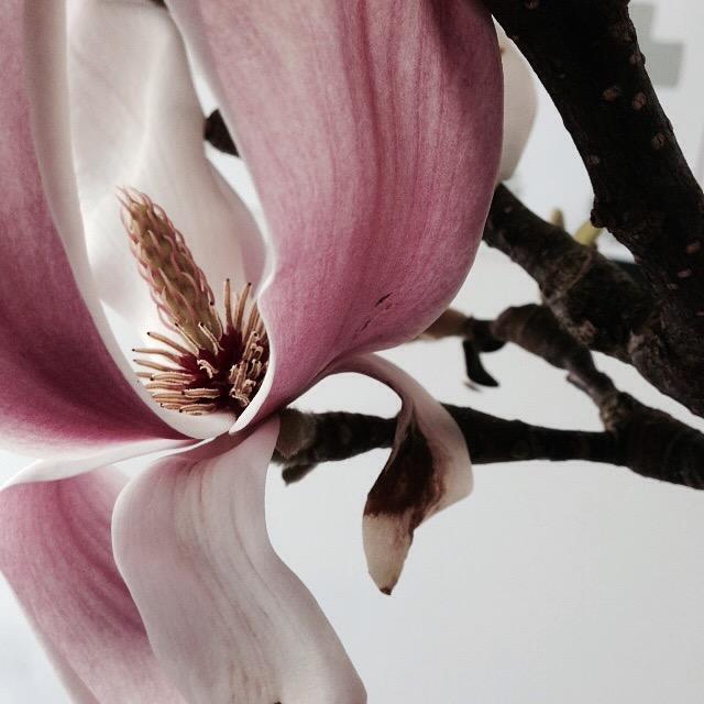 Flower bloom_006.JPG