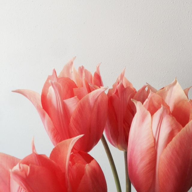 Flower bloom_007.JPG