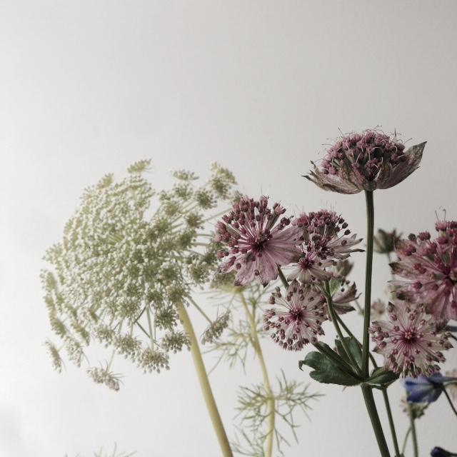 Flower bloom_008.JPG
