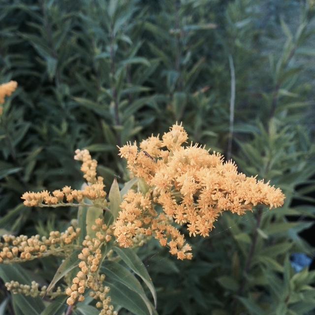 Flower bloom_010.JPG
