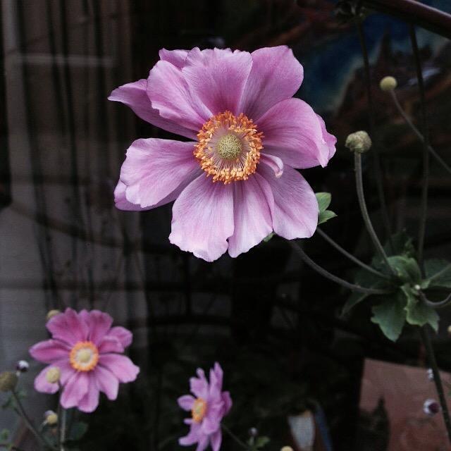 Flower bloom_012.JPG