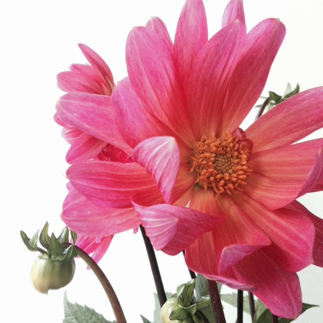 Flower bloom_014.JPG