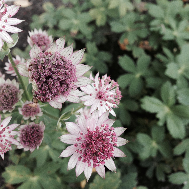 Flower bloom_017.JPG