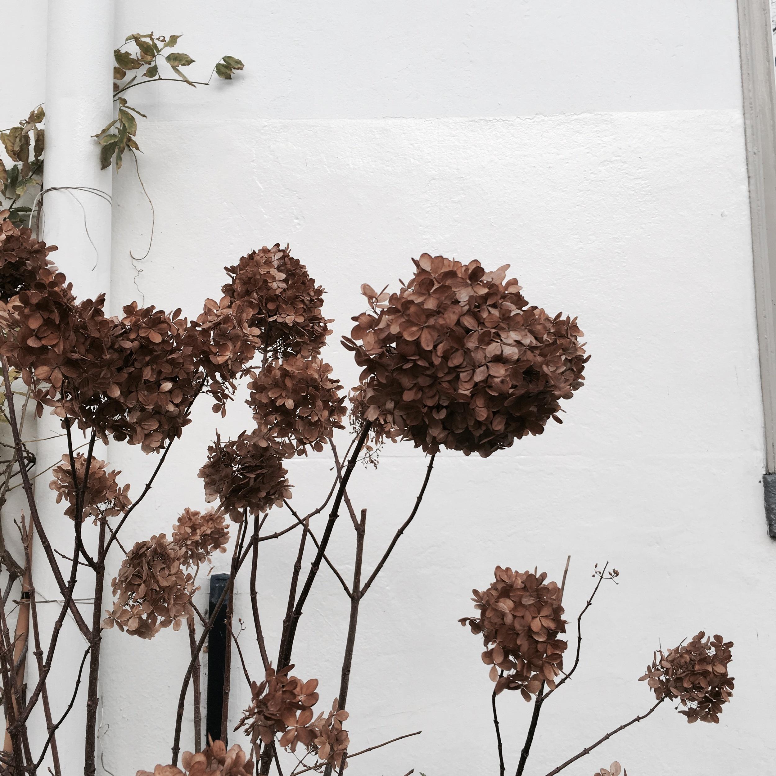 Flower bloom_021.JPG