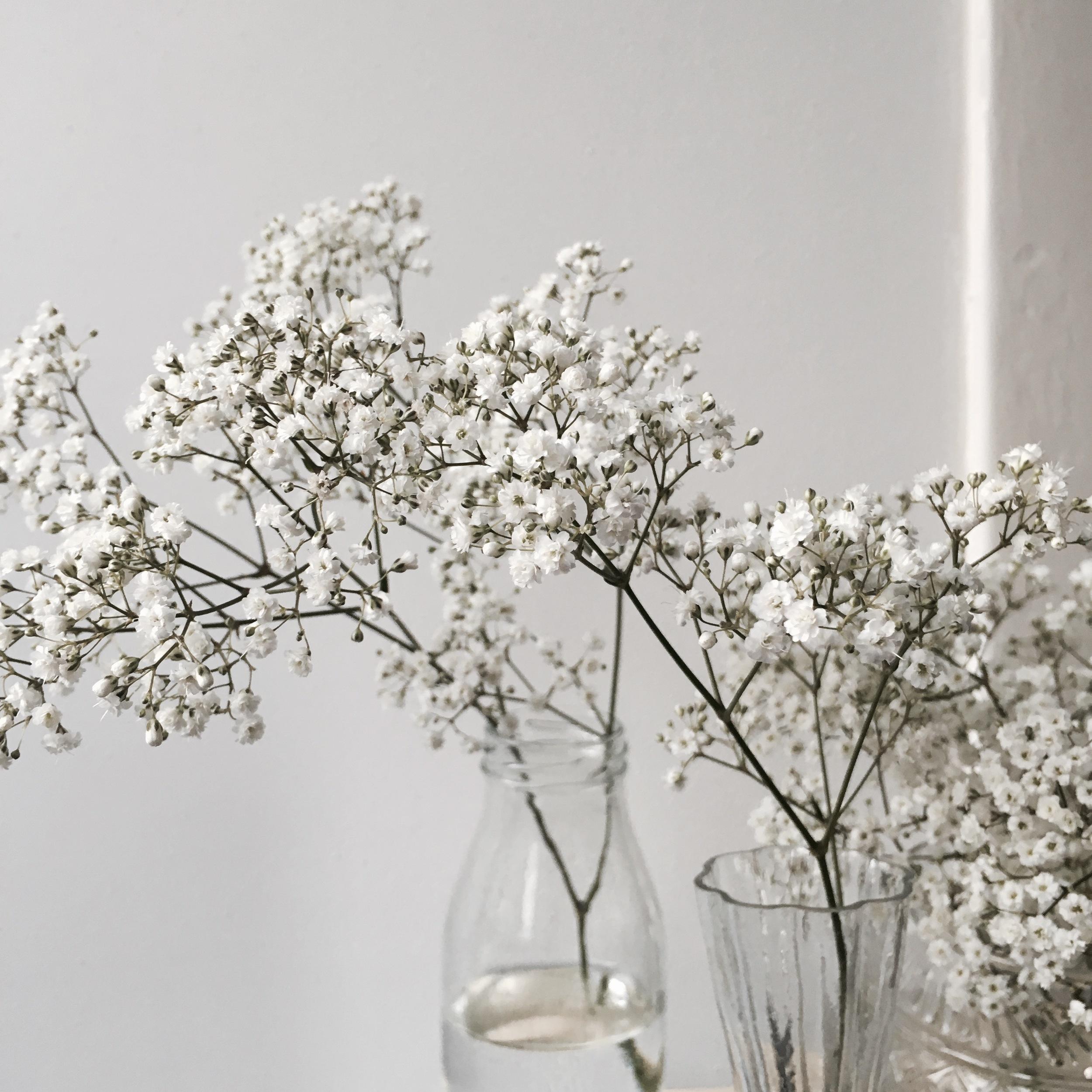 Flower bloom_022.JPG