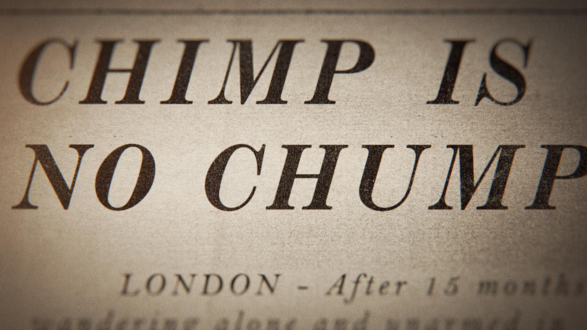 EXP_chimp.jpg