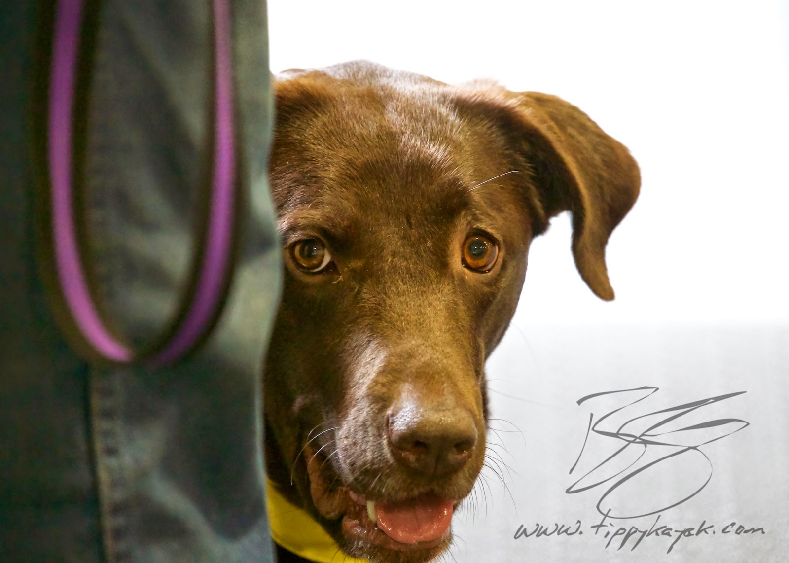 A dog's trust in us deserves a special kind of care and gentleness in training.