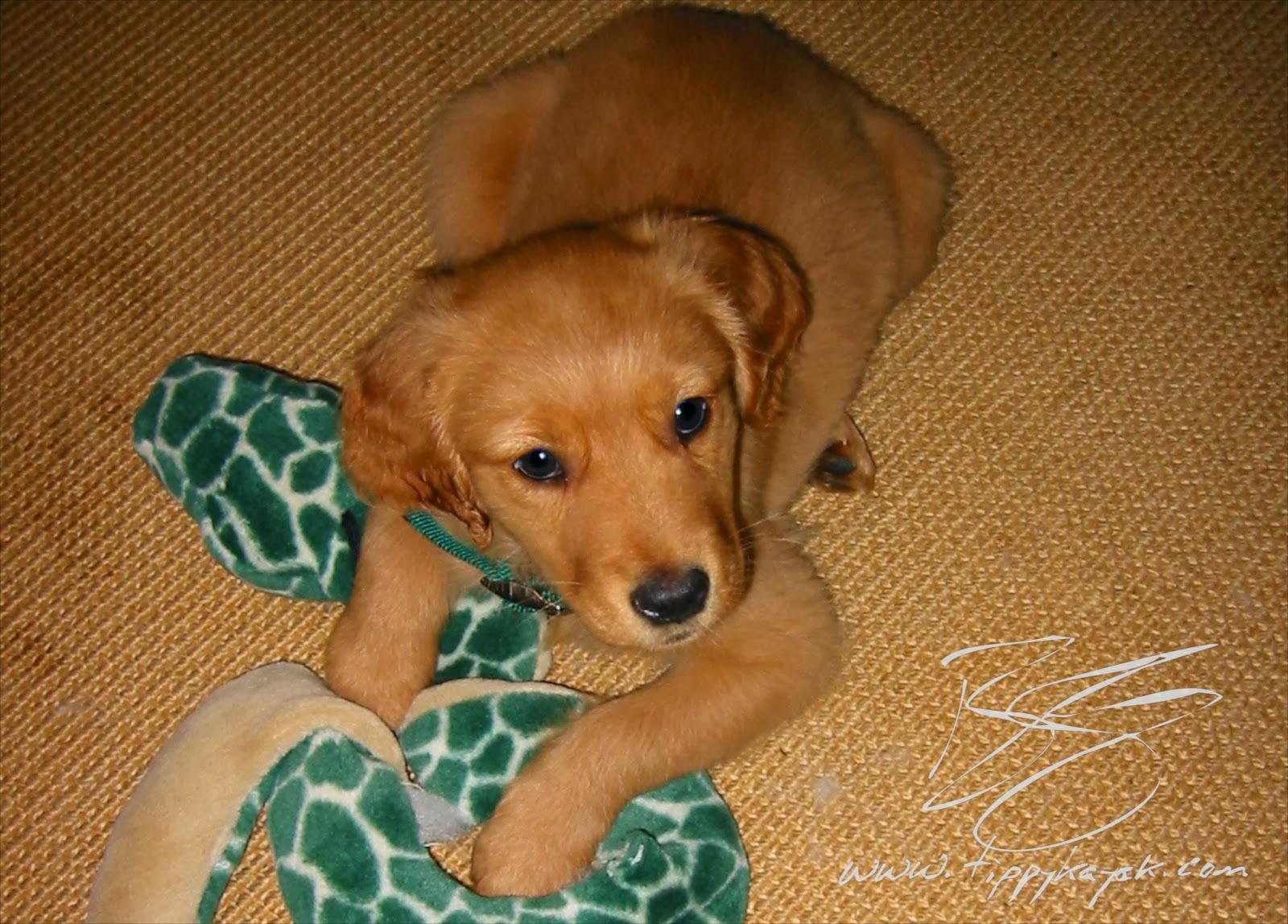 Gus, 2002