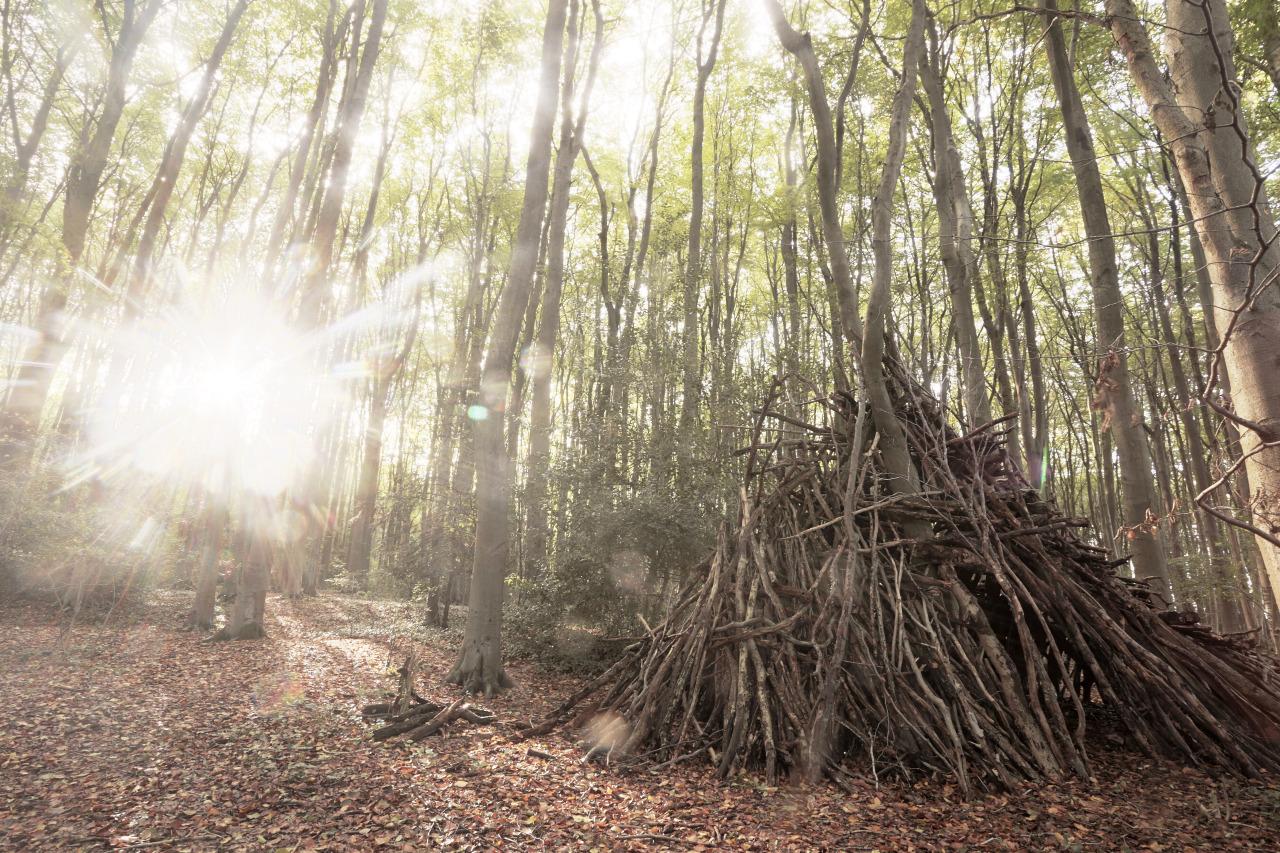 Den in the woods near bristol
