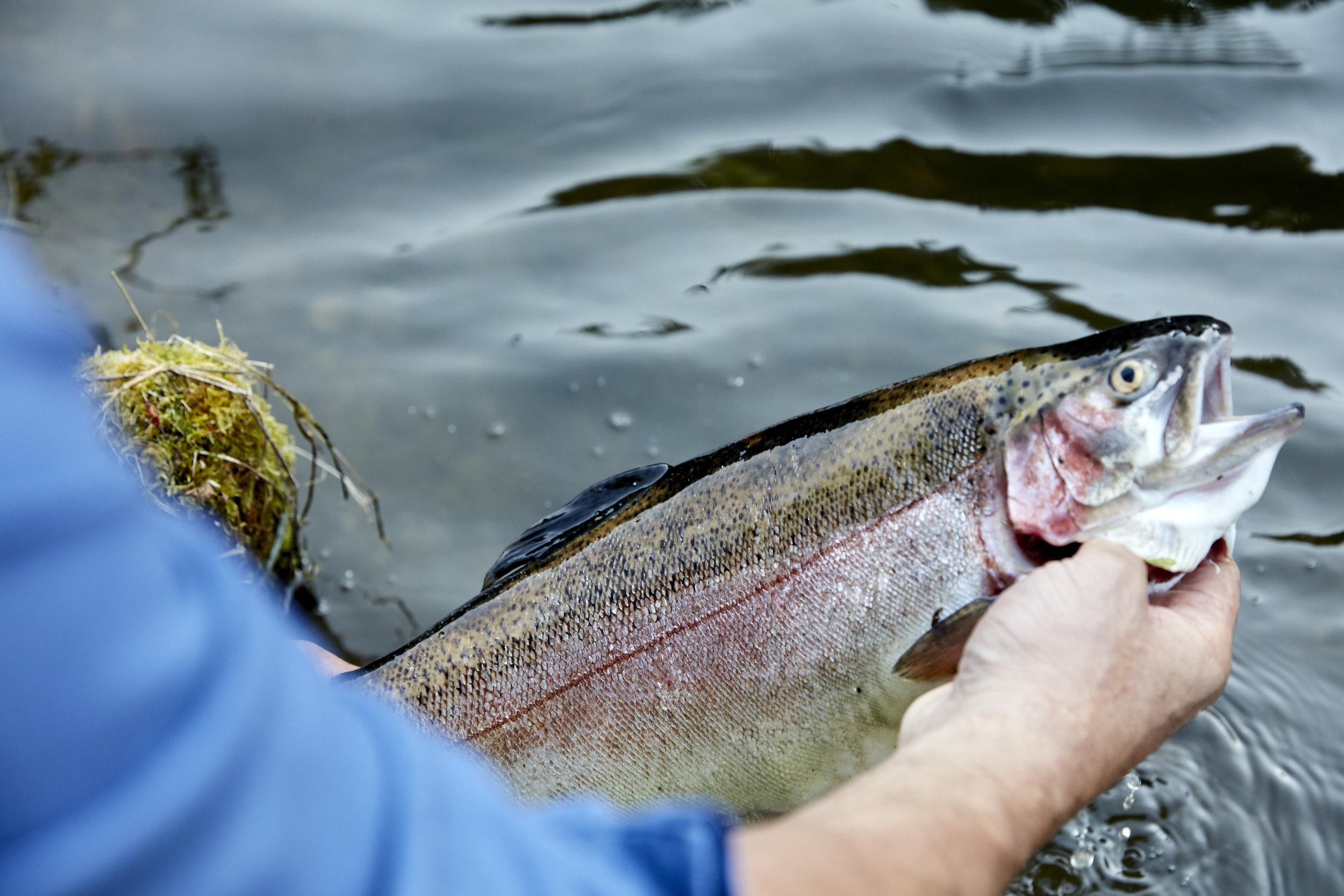 WW_TRAFALGAR_FISHERIES_EDIT_021.JPG