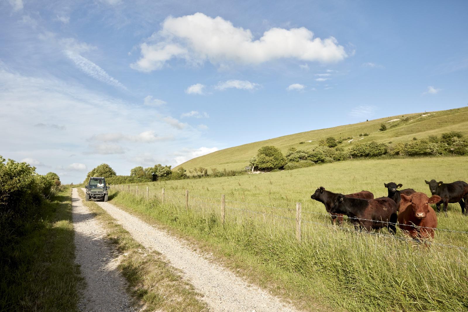 WW_LAWN_FARM_COWS_008.jpg