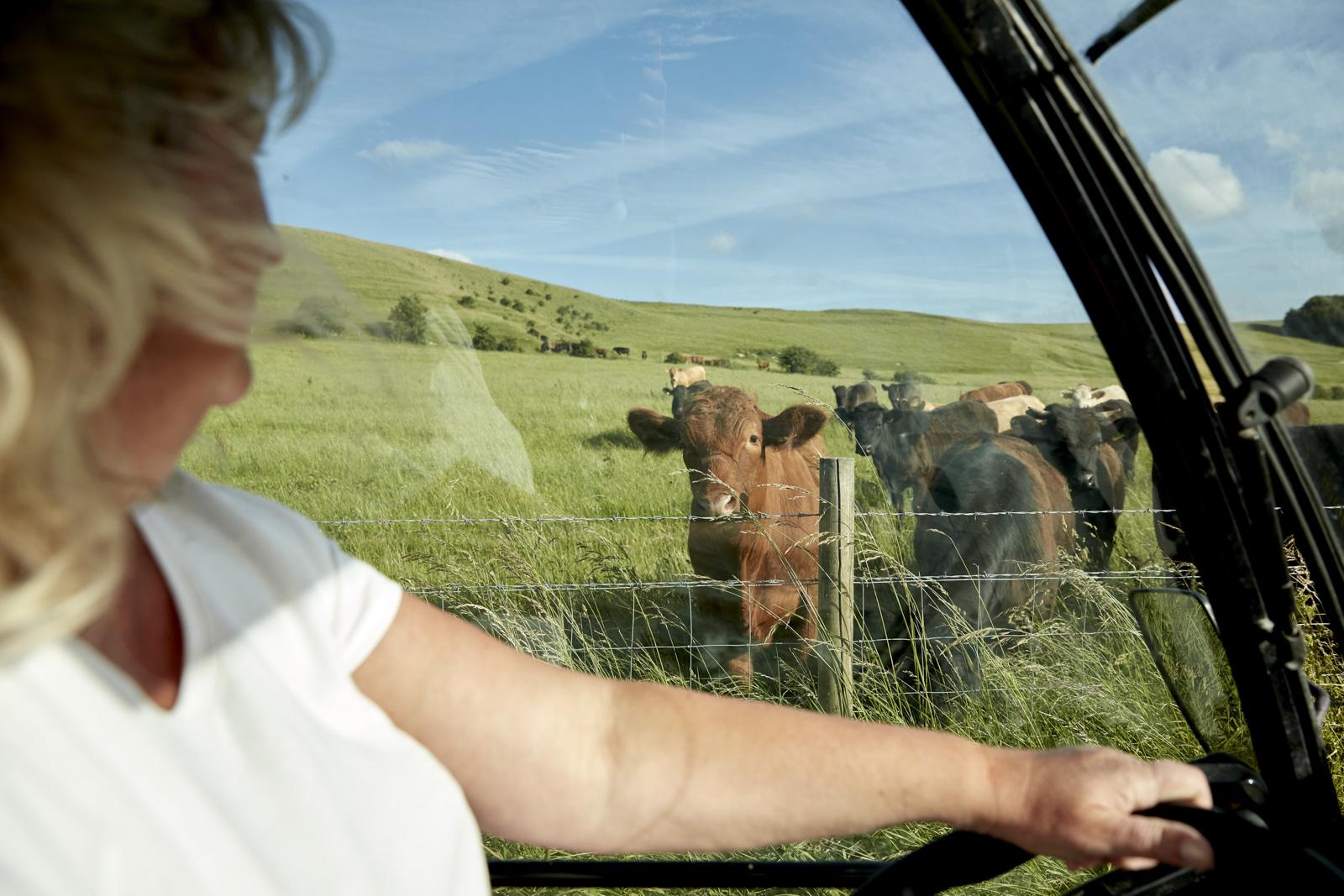 WW_LAWN_FARM_COWS_010.jpg