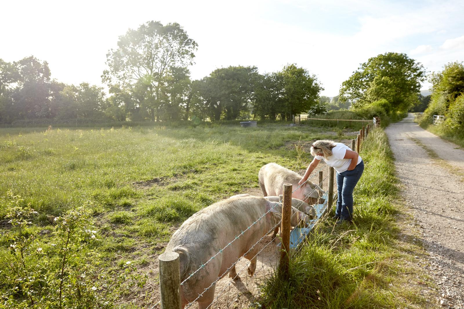 WW_LAWN_FARM_PIGS_004.jpg