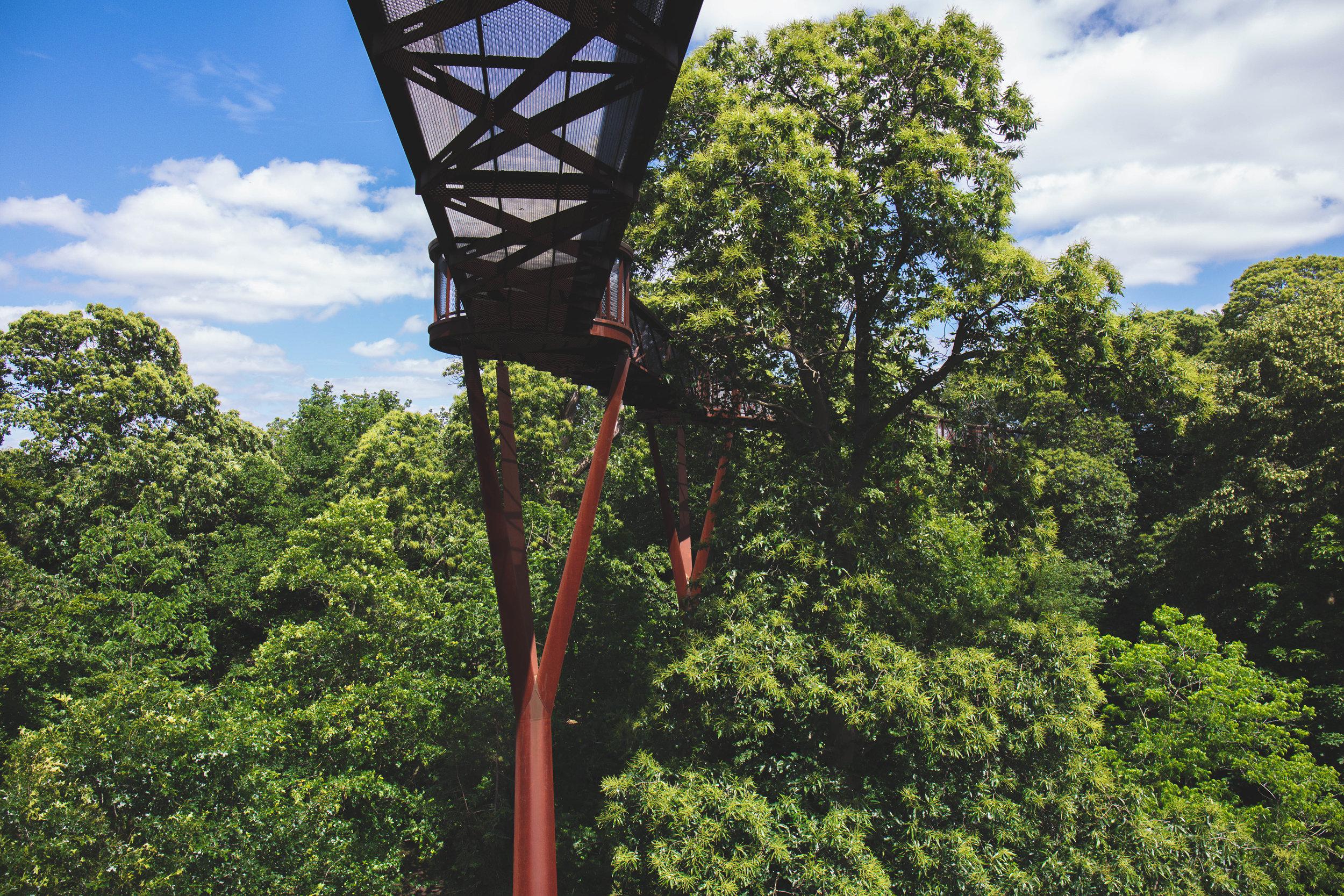 Treetop Walkway -
