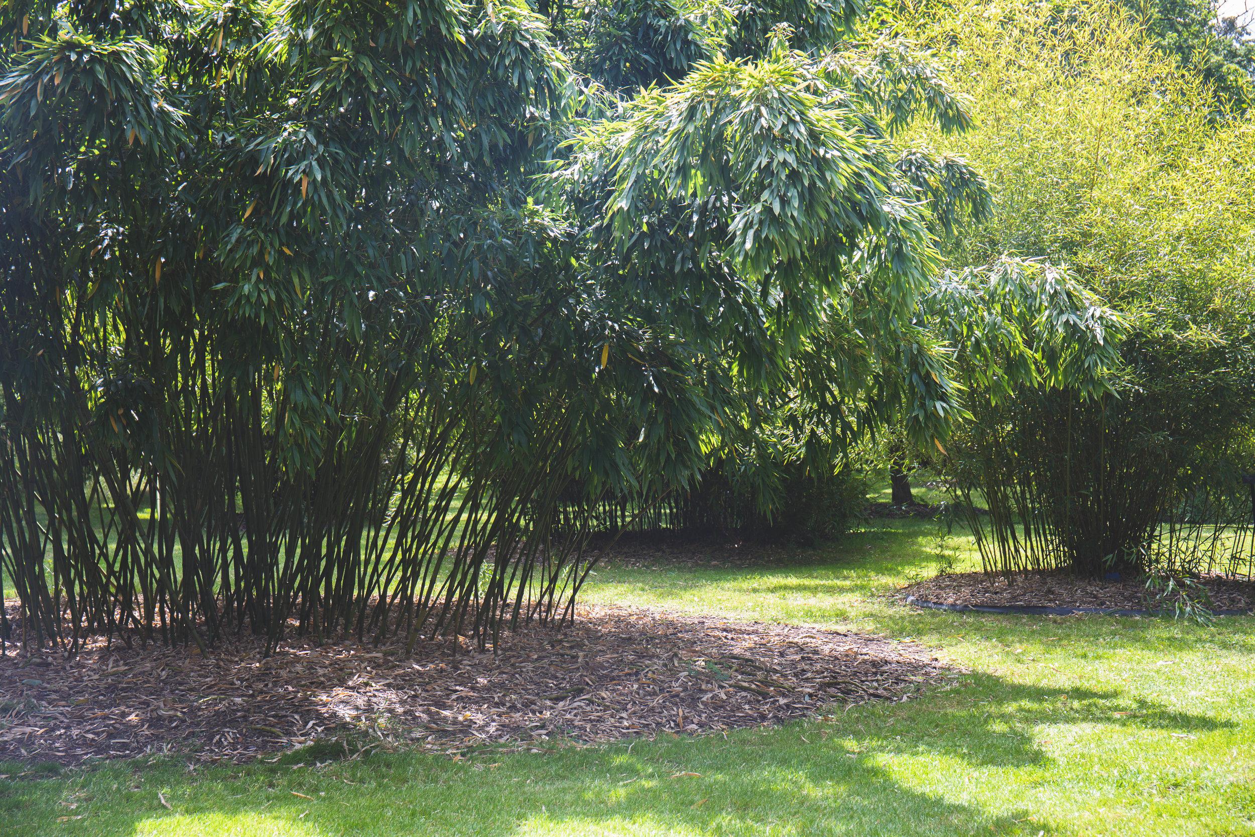 Minka House and Bamboo Garden -
