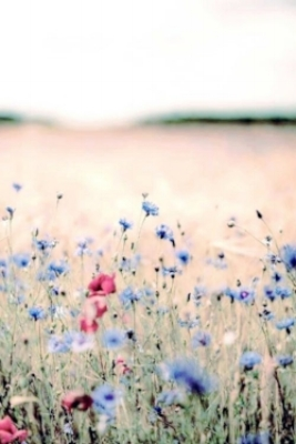 veldbloemen.jpg