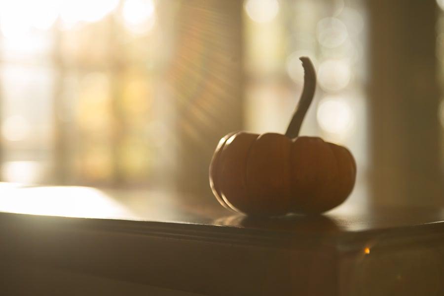 pumpkin haze