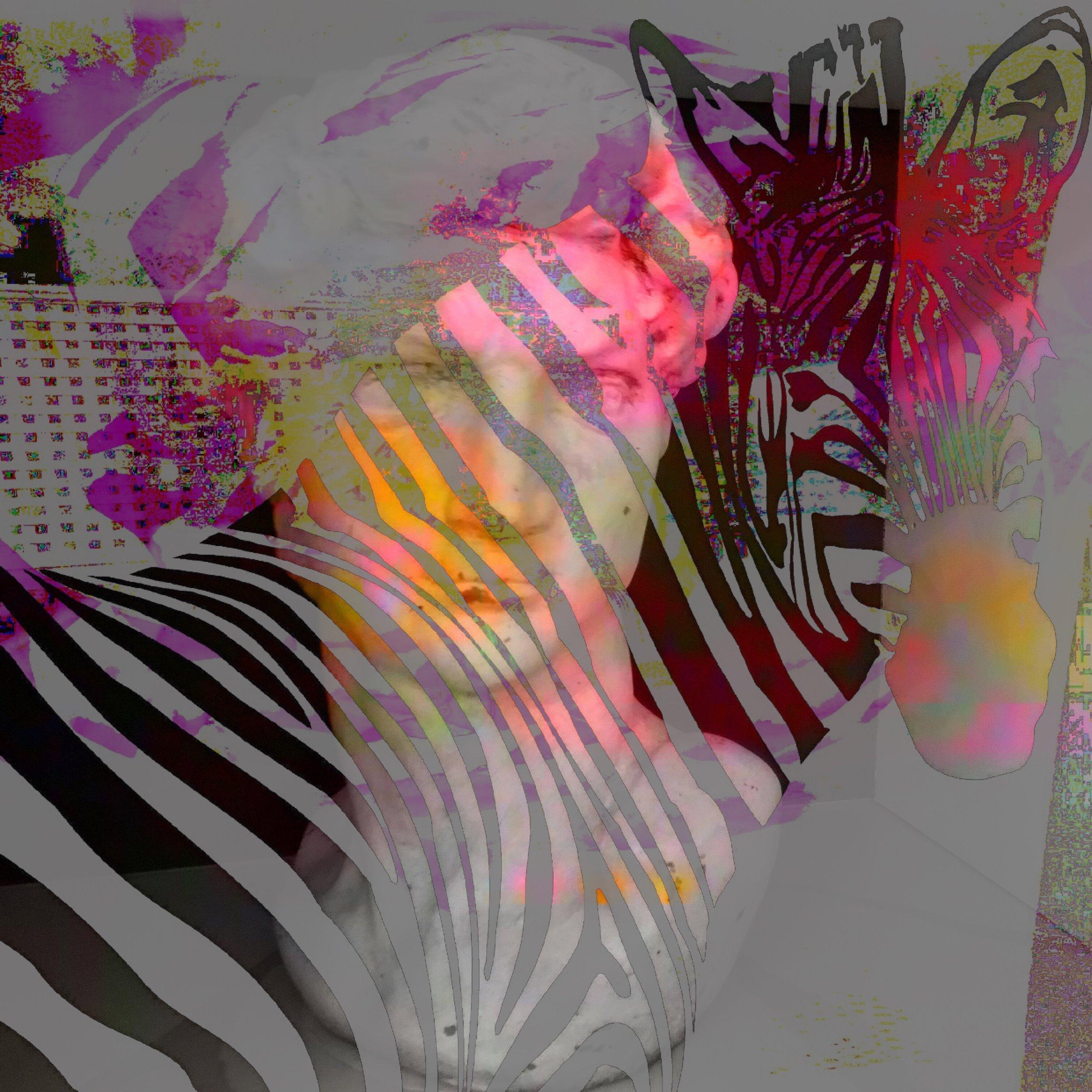 David Zebra Head.JPG
