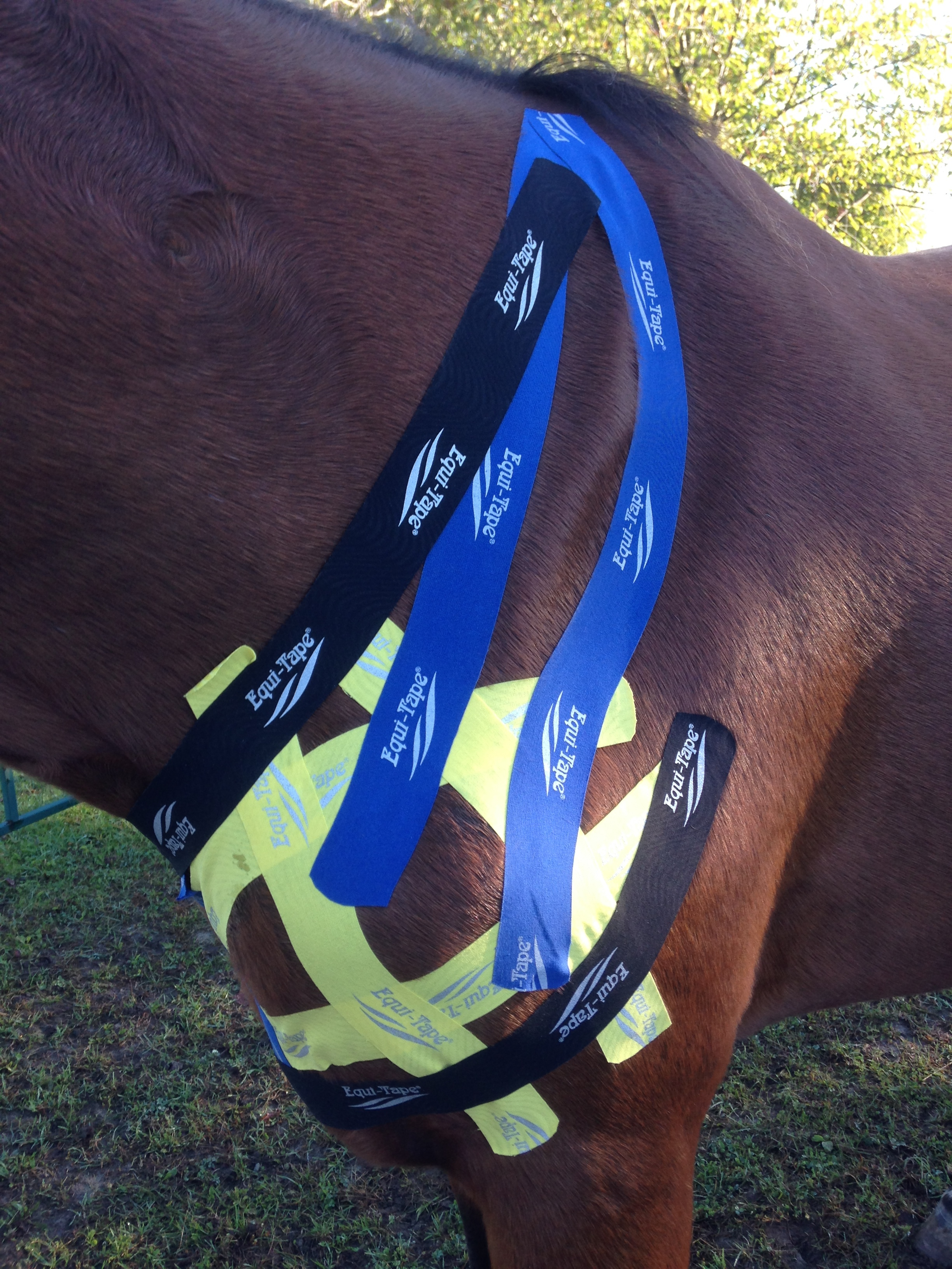 Support taping for a horse suffering from Sweeney.