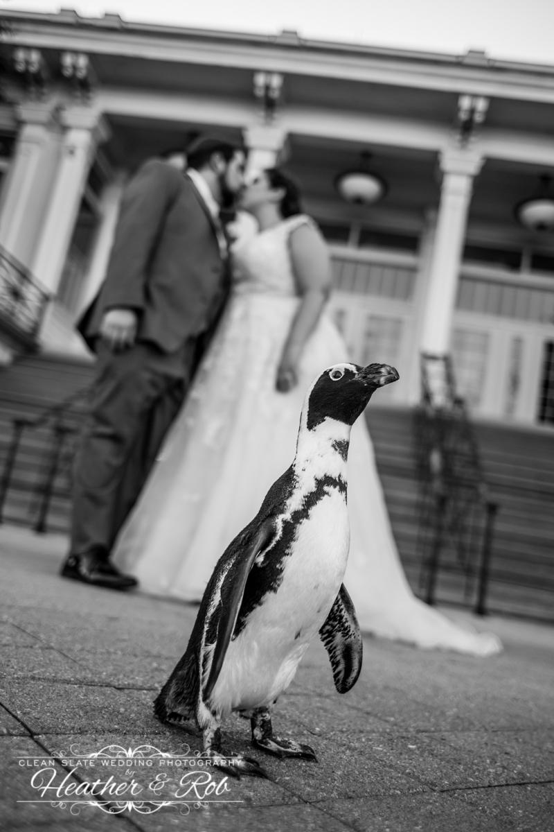 Rachel & Evan Baltimore Zoo Wedding-451.jpg