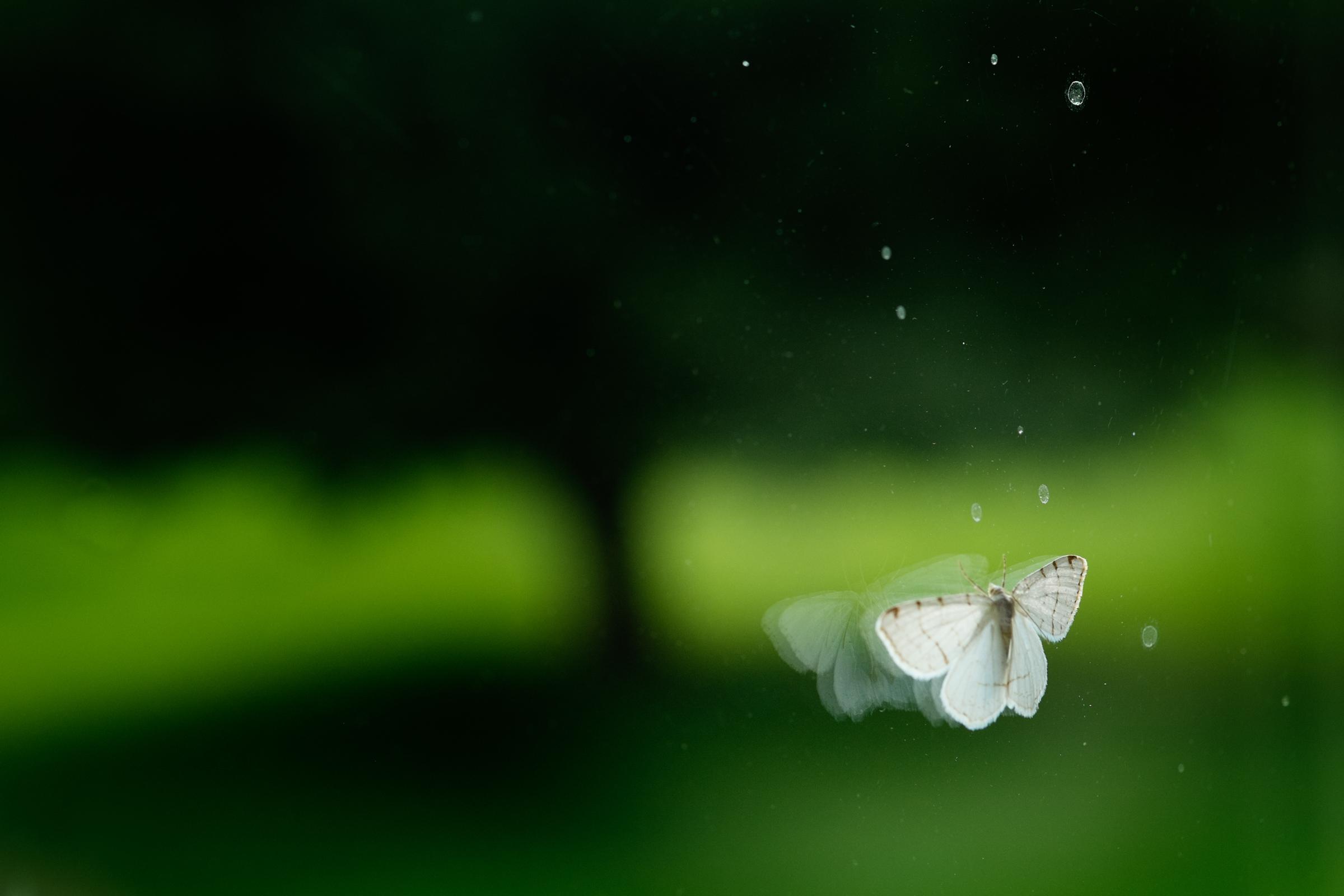 moth_web.jpg