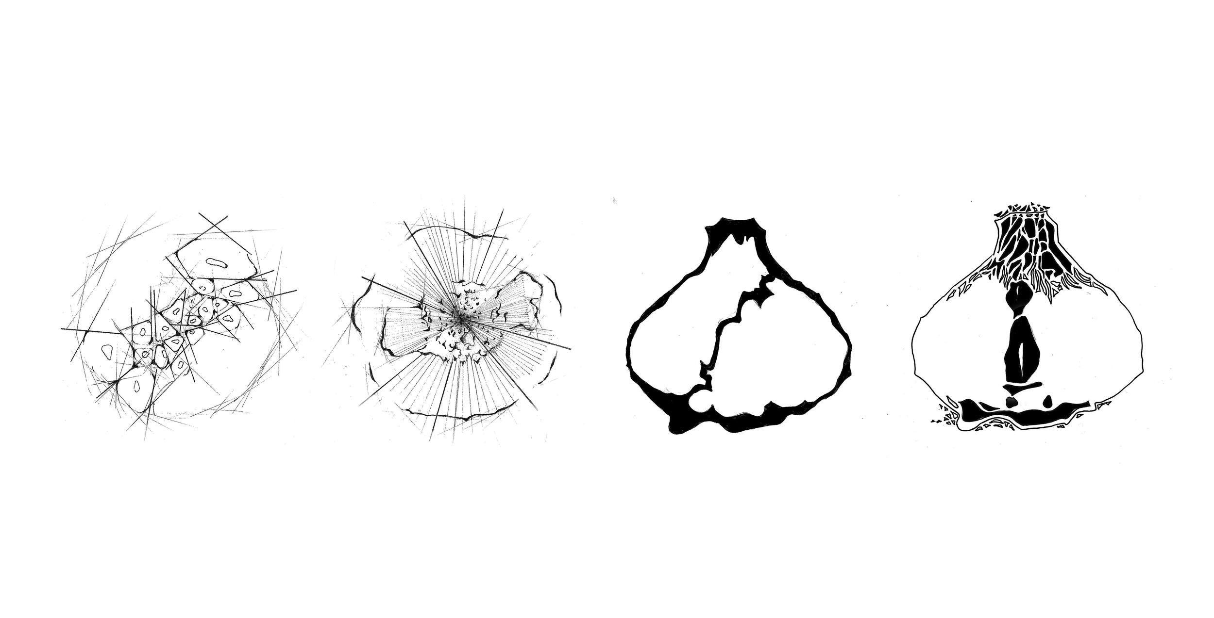 GARLIC DIAGRAMS3.jpg