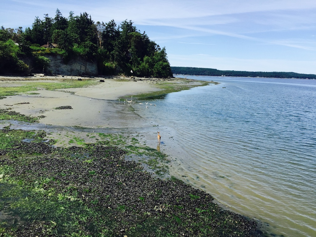 Before you get on the water, plan your paddle: - Between Coupville and Langley