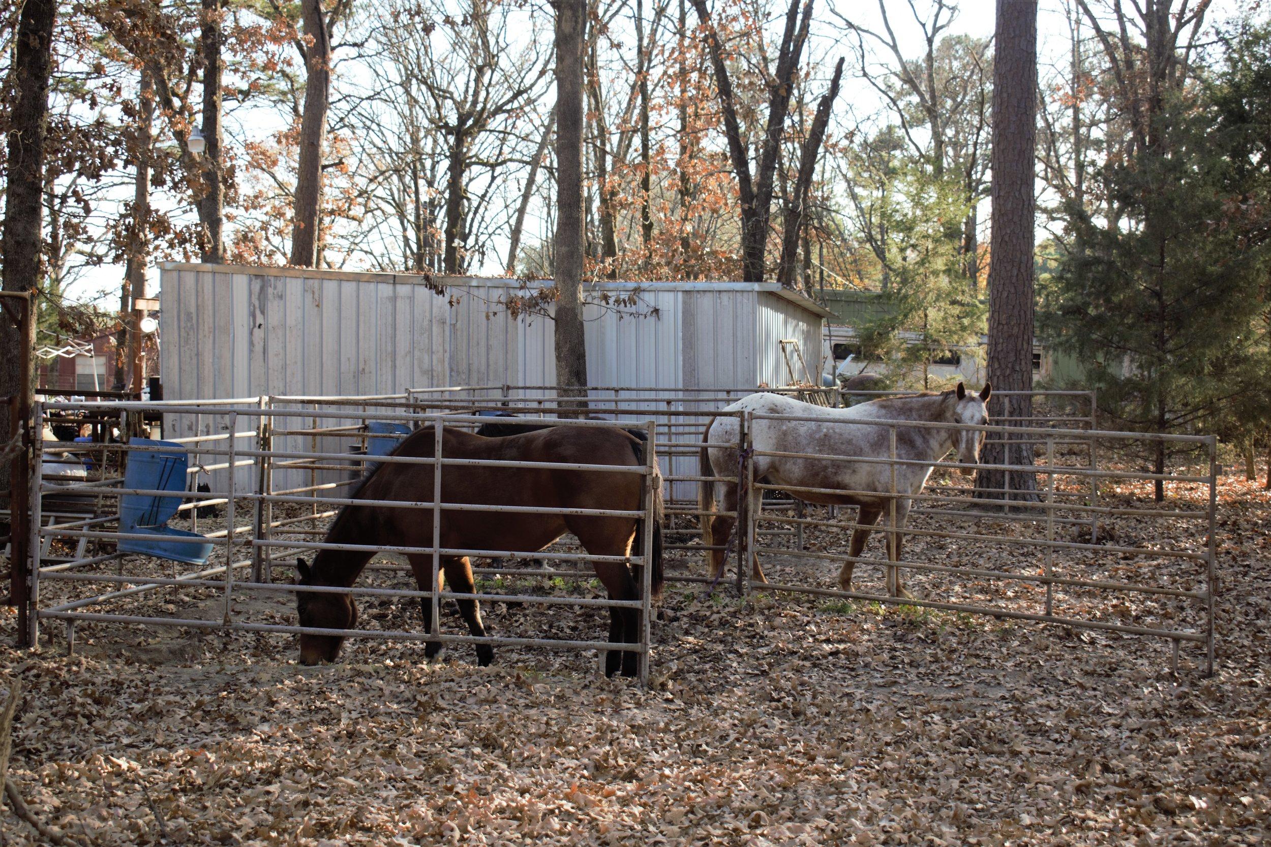 horses 2.jpg