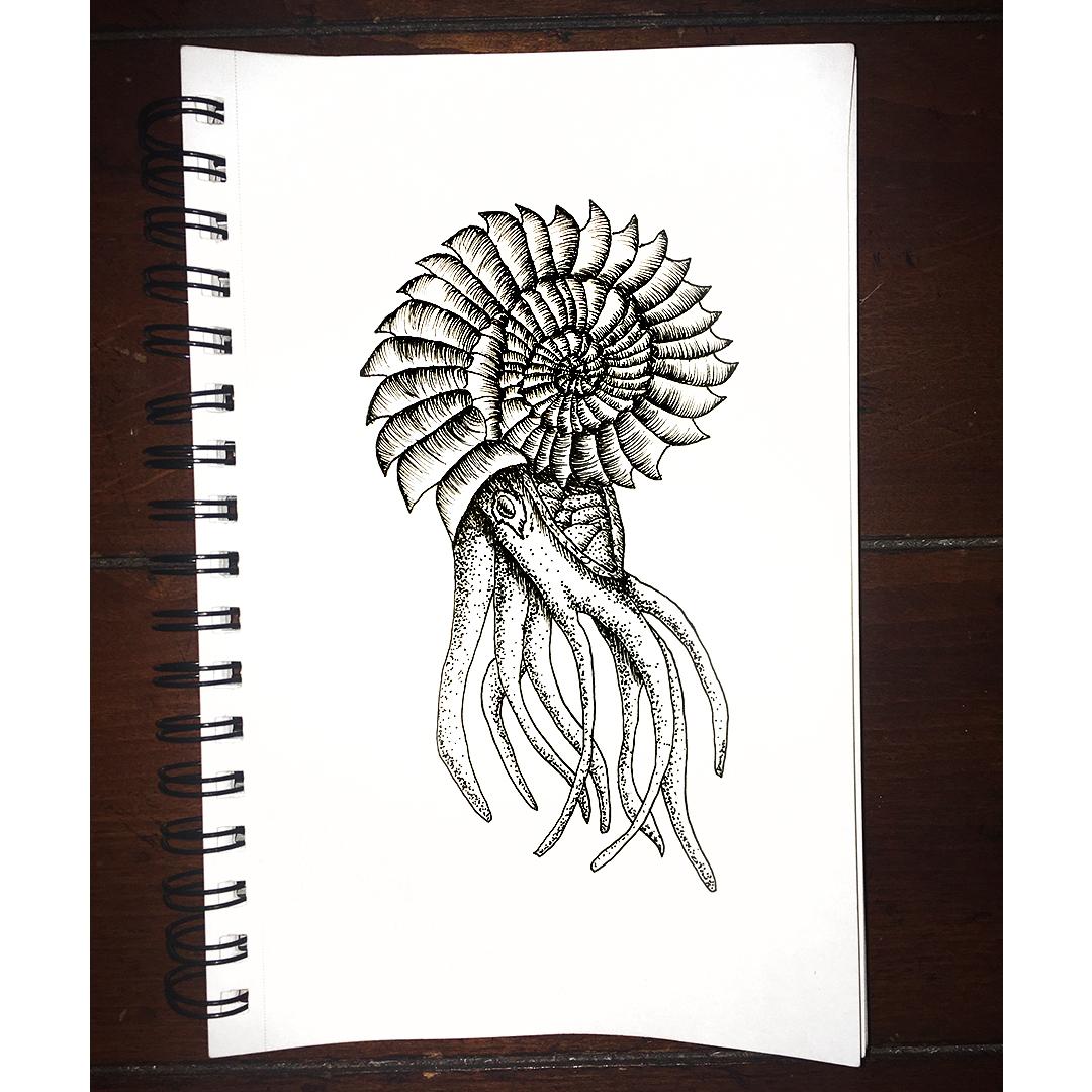 squid2.jpg