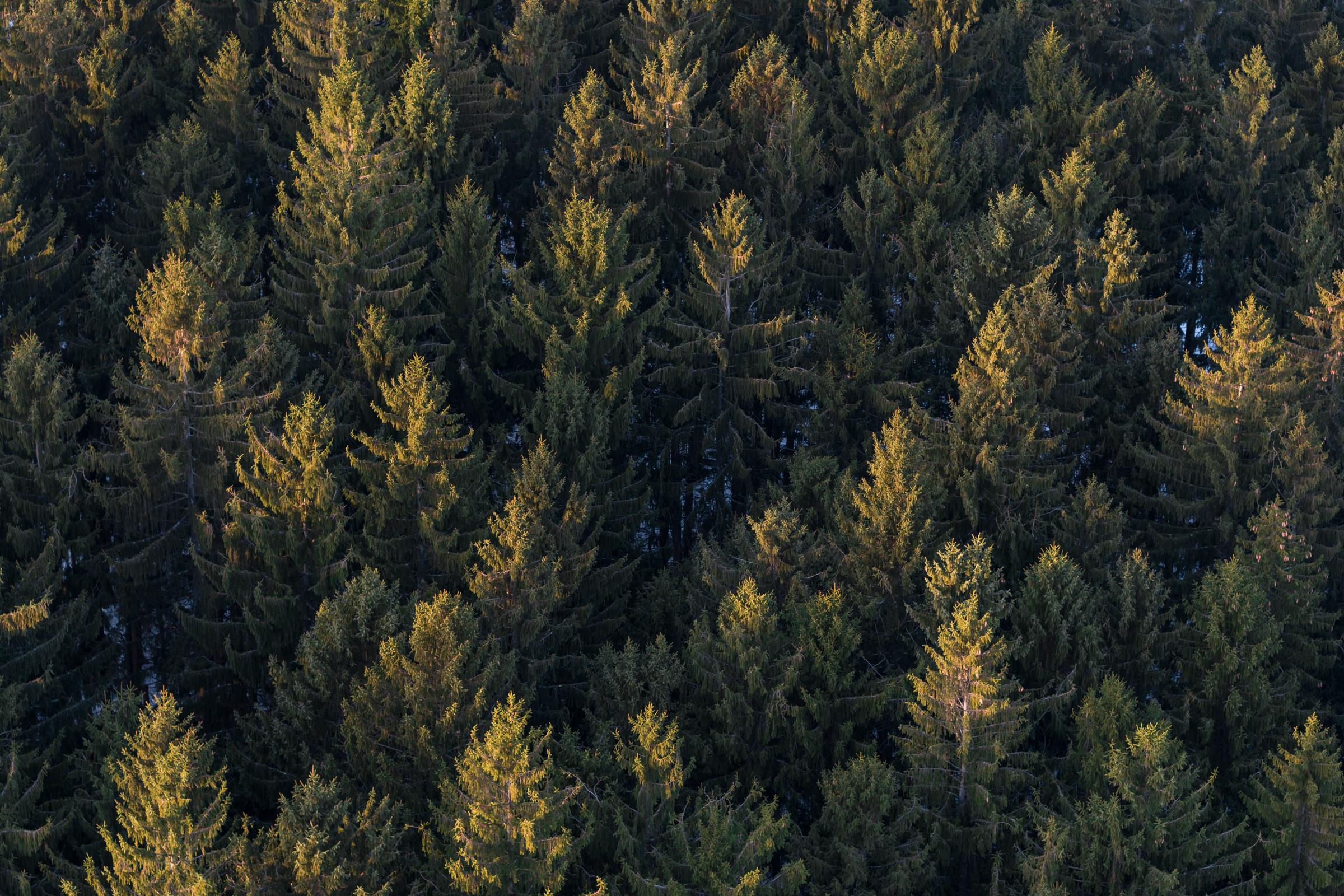 Ty_Poland_Inspire_Vernon_Trees.jpg