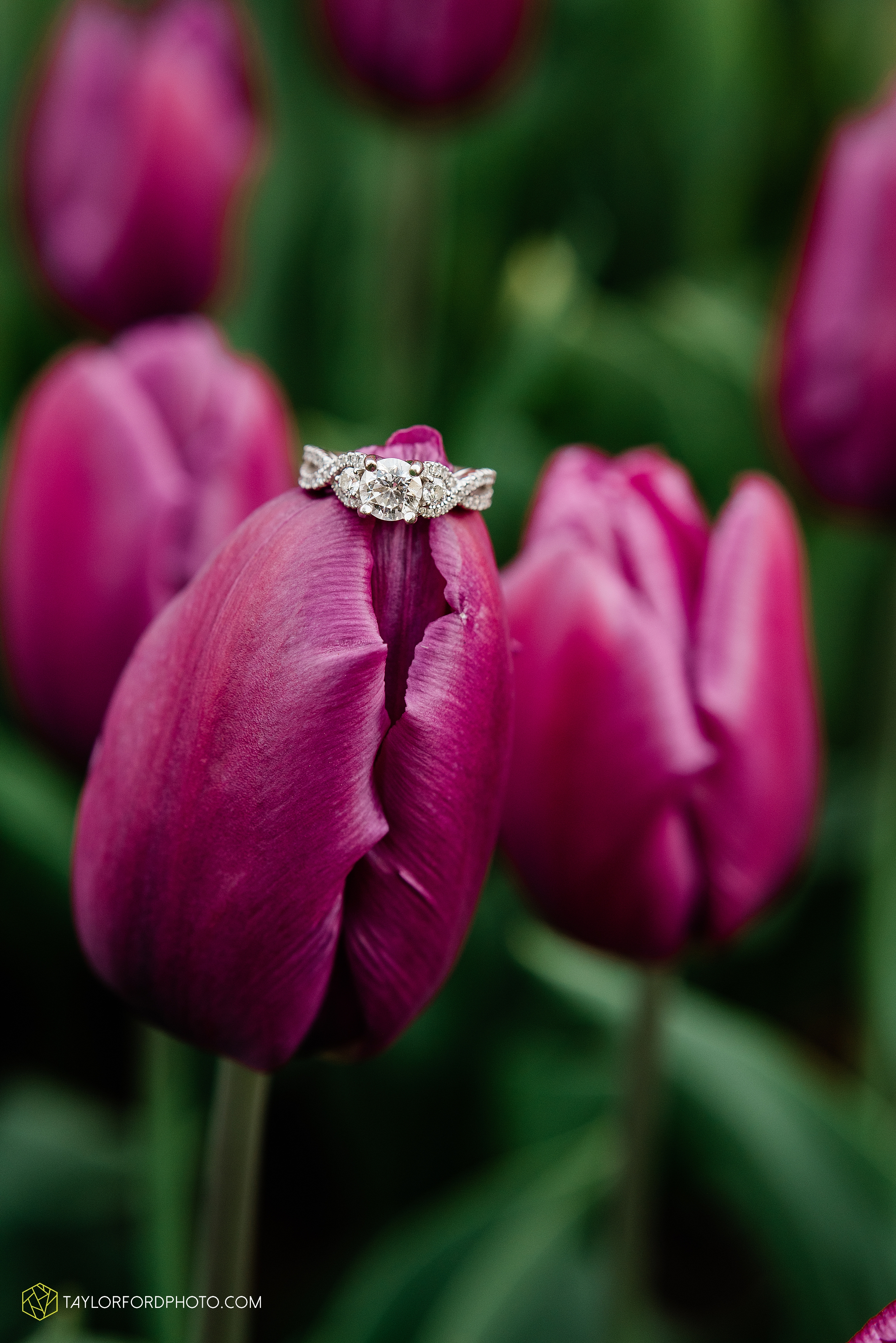 holland-michigan-tulip-time-downtown-hope-college-riverside-park-laketown-beach-lake-michigan-engagement-photographer-photography-taylor-ford-hirschy-photographer_2609.jpg