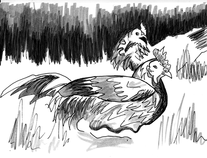 Acadie_Chickens.jpg