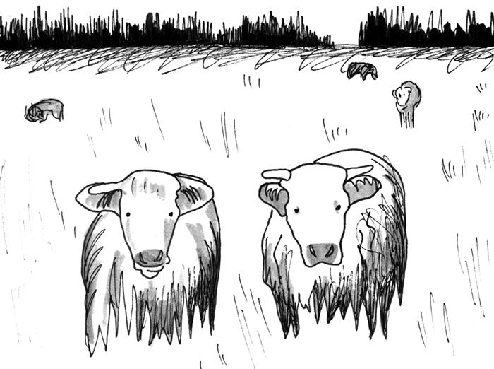 Acadie_Cows.jpg