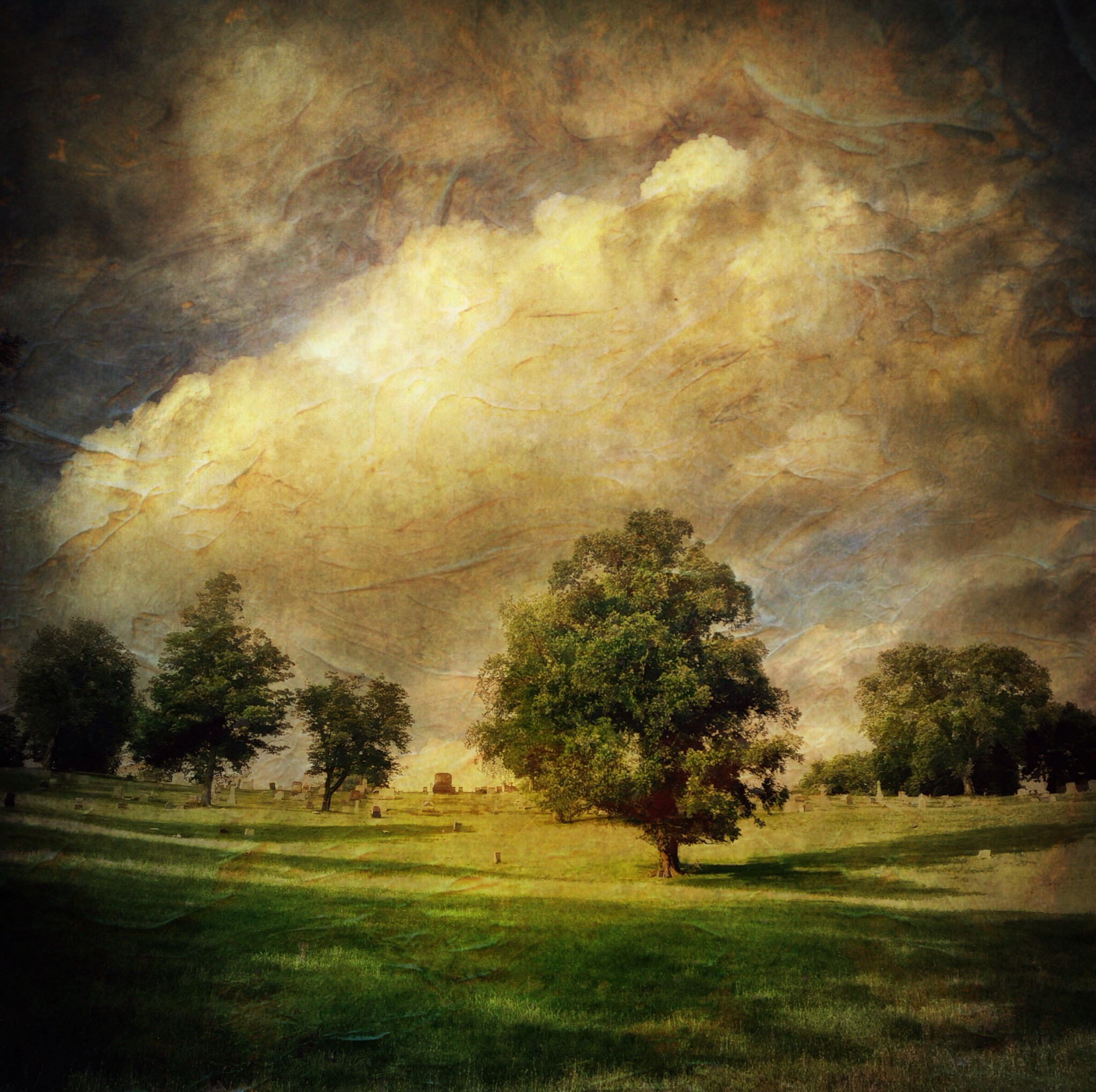 Locust Tree, Calvary Cemetery, Summer.