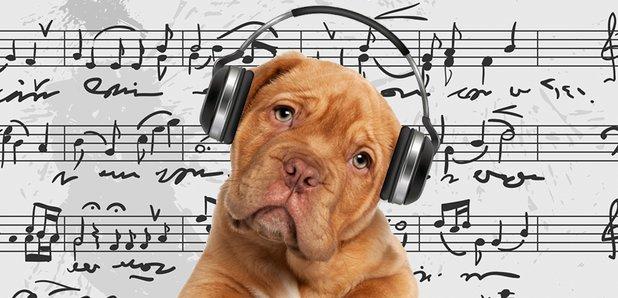 My Dog's Listening Proclivities