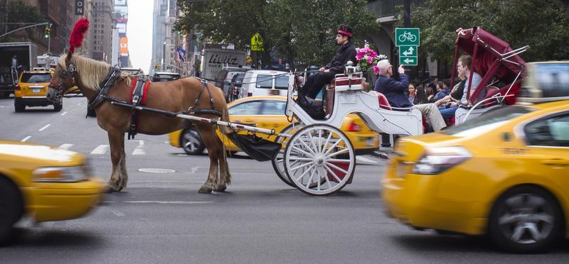 horses in Manhattan.jpg