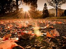Sun on leaves.png