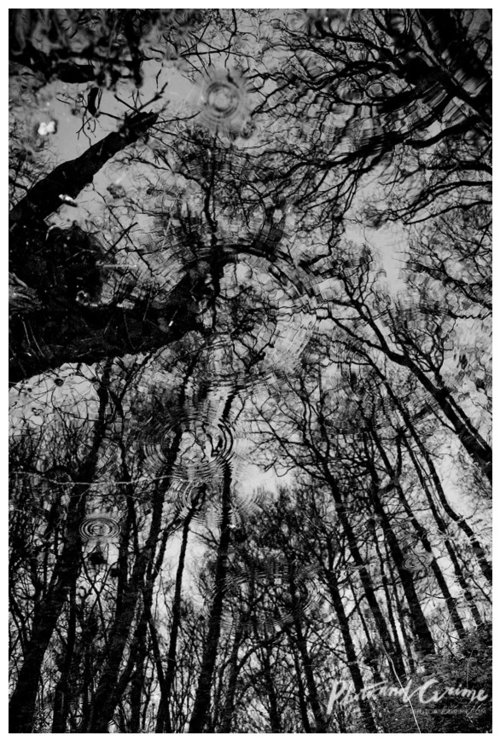 photography photoandgrime pieke roelofs 20.jpg