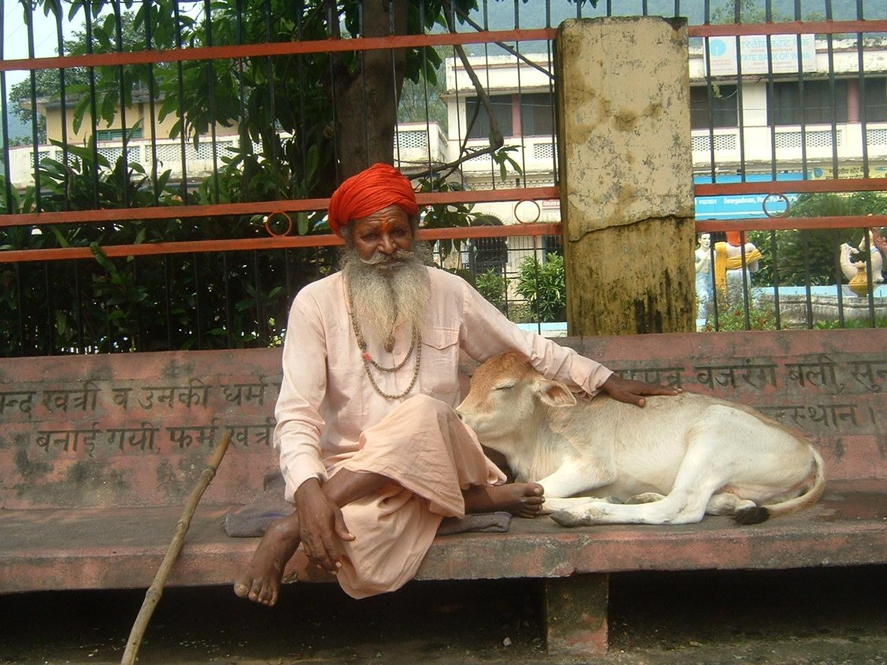 A Sadhu with a young calf. Photo:  Wikipedia