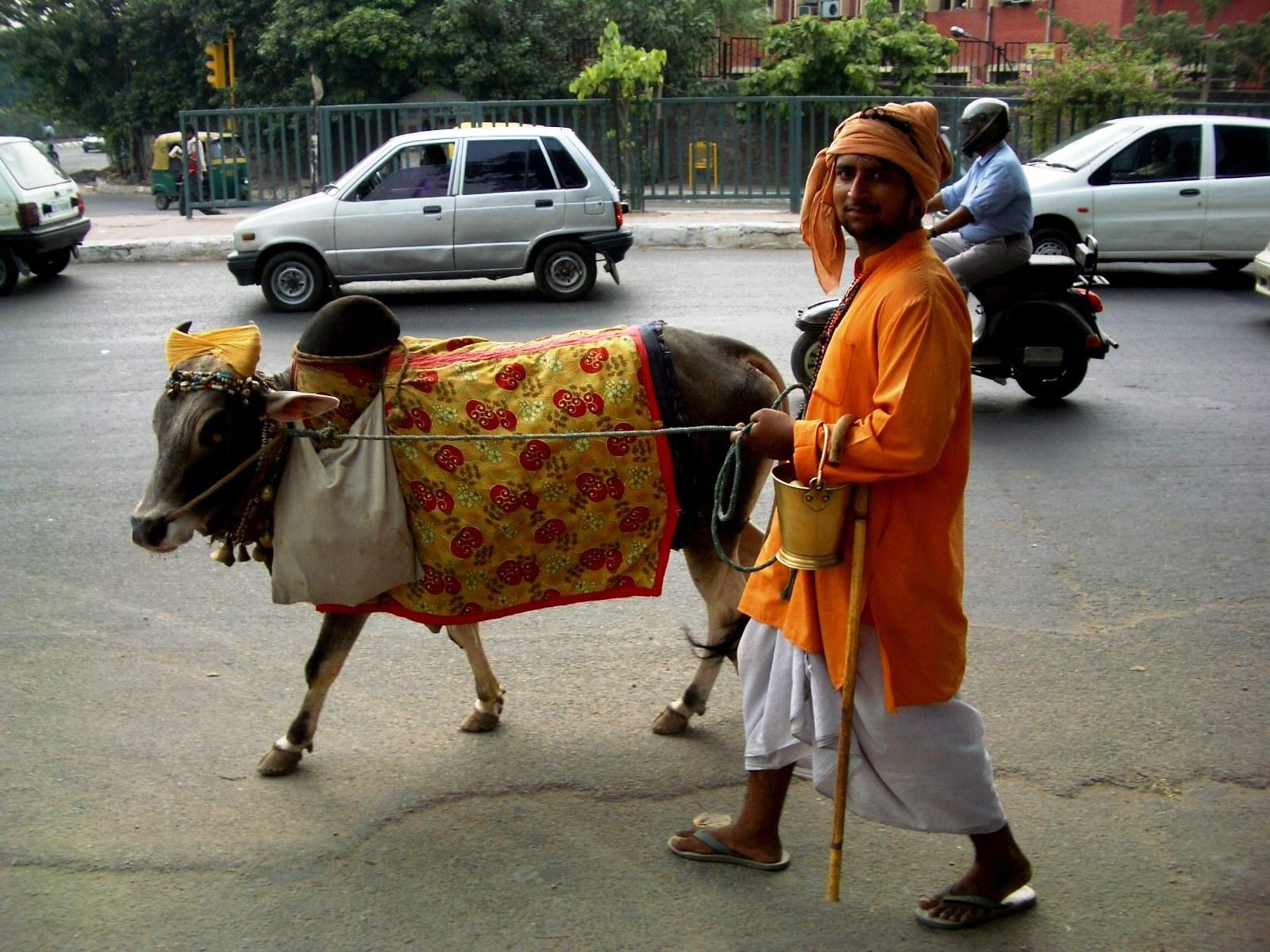 A man with a cow. Photo:  Wiki, John Hill  ( CC BY-SA 3.0 )