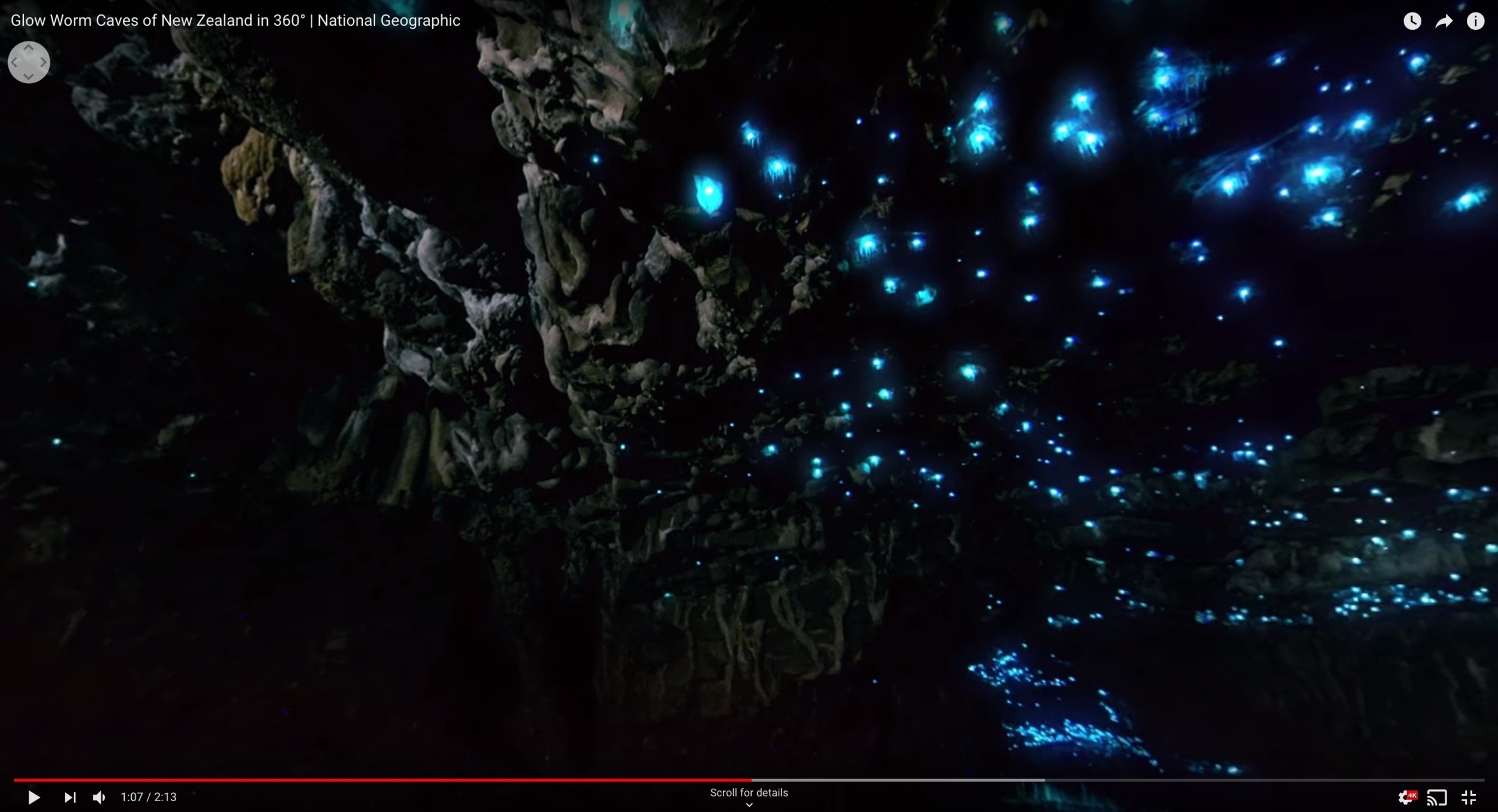 Arachnocampa luminosa; New Zealand's glowworm .Photo: Youtube, National Geographic